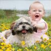 ペットが子供に与える影響って?感受性との関連性や体験談まとめ