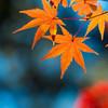 東京から約1時間!関東近郊の子供と楽しめる紅葉スポットをご紹介