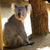 足立区生物園で可愛い生き物たちにほっこり!小さな子供とでも楽しめる足立区生物園の魅力