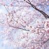 「この季節がぶっちぎりで一番すき!」蜷川実花のインスタグラムが桜だらけ…美しい♡