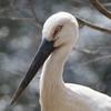 動物達へのエサやりツアーが大人気!羽村市動物公園へ遊びに行こう♪