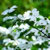 目隠しや日差し対策に!庭木の選び方と、おしゃれで人気の15選をご紹介