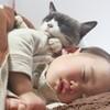 ペットがいる家庭に赤ちゃんがやってきた!ペット達の反応はどうだった?