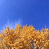 外遊びにぴったりの季節が到来!子供と秋にしたい遊び、おすすめ7選