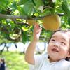 首都圏から日帰りで行ける、子供と楽しむ果物狩りスポット