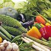 子供の食育調査結果から考える、野菜嫌いを克服するコツや考え方とは?