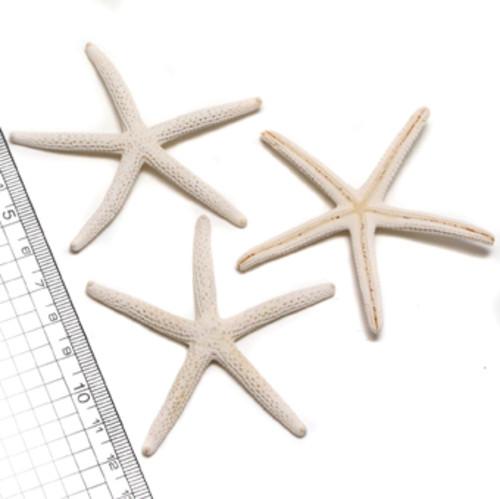 スターフィッシュ ヒトデ ホワイト 約6-8cm 2個