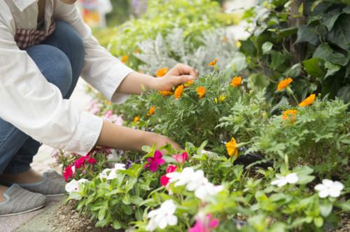 植物 世話
