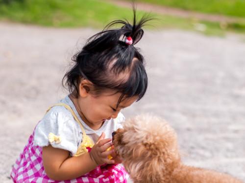 1歳 子供 犬
