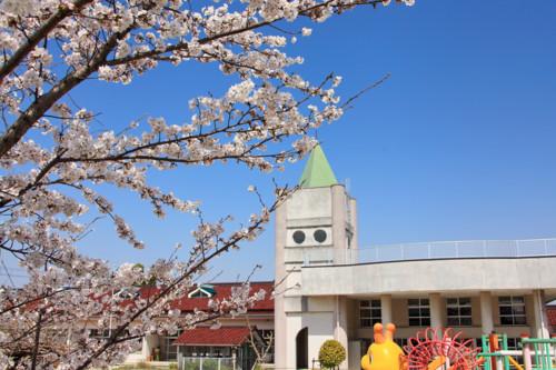 保育園 桜