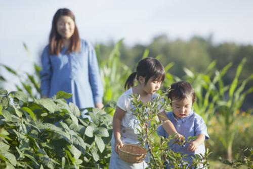 子ども 野菜