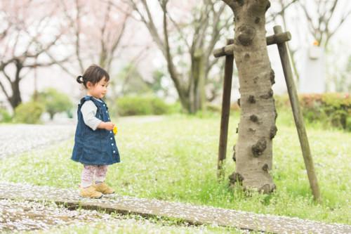 1歳 桜 歩く