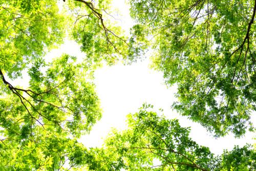自然 綺麗 緑